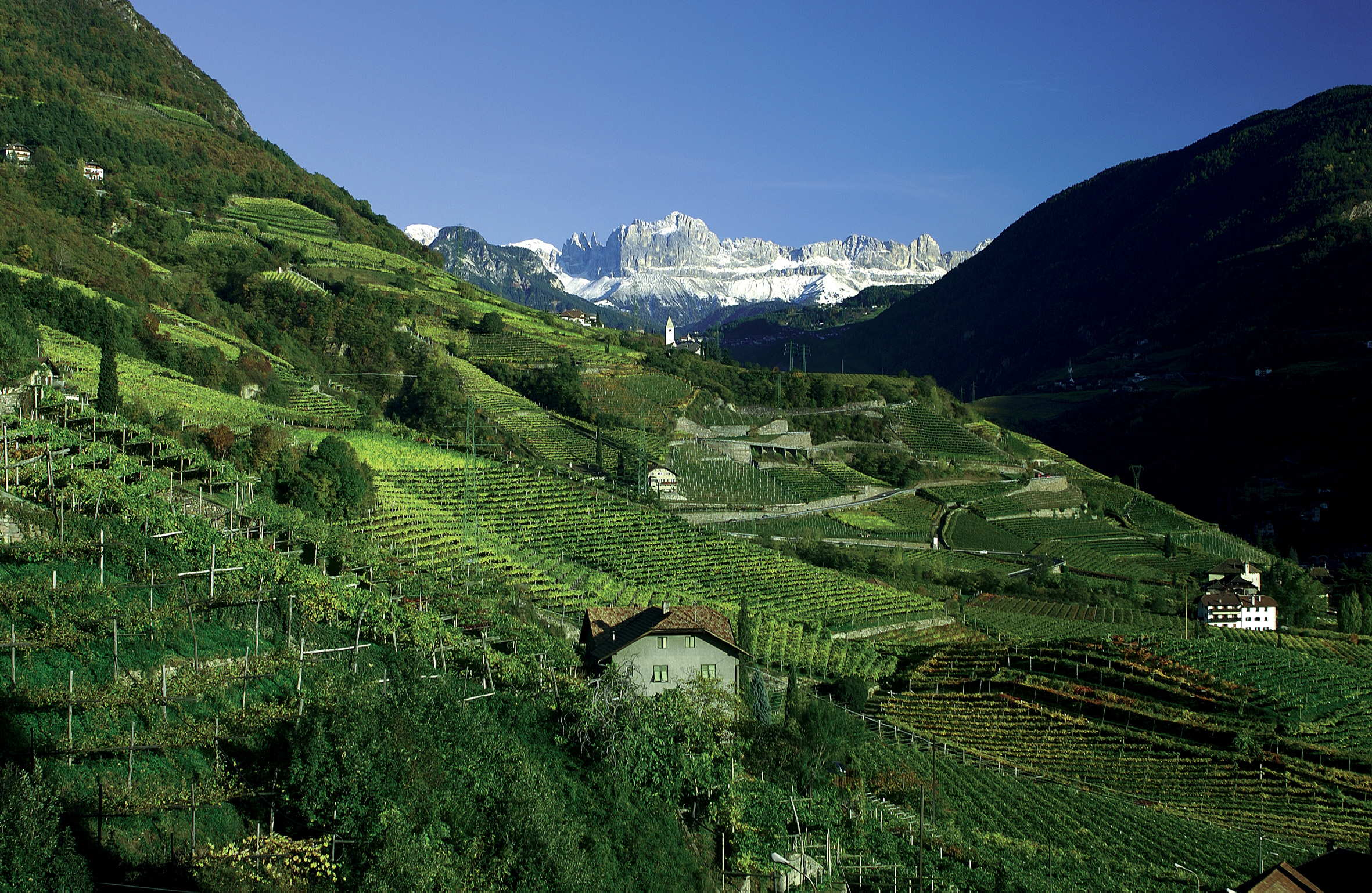 Vineyards in Alto Adige. Photo:www.johnmariani.com