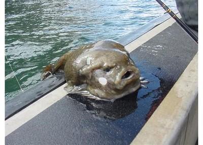 Strange japanese fish - photo#5
